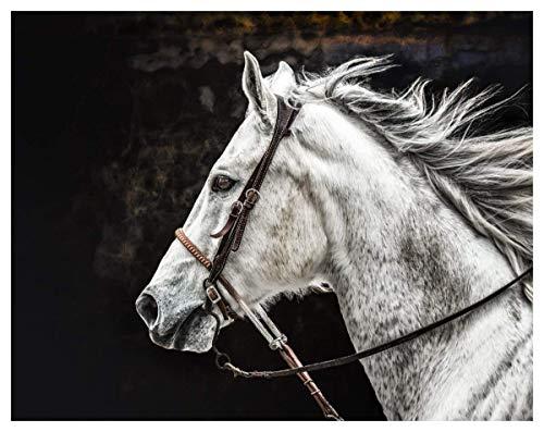 Calm Gaze White Horse Fine Art Print - 11x14 Unframed Photo Art - Great Gift for Horse Lovers. Perfect for the Home, Game Room, Dorm Teen or Boy/Girl Bedroom Decor. Gift Under $25 ()