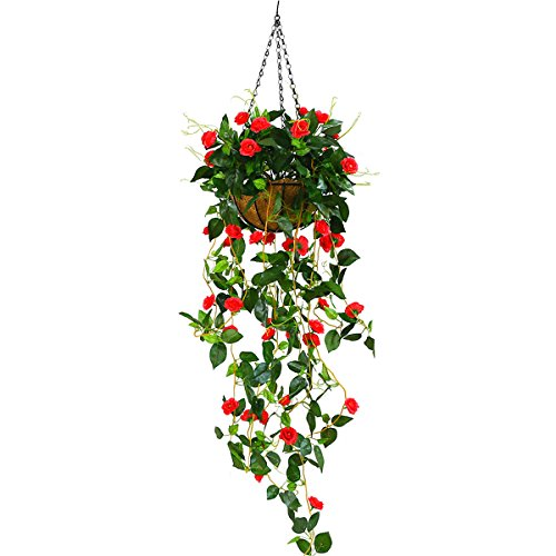 Hanging Basket Plants, 45