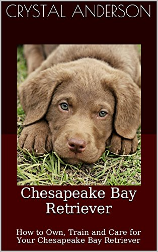 Chesapeake Bay Retriever: How to Own, Train and Care for Your Chesapeake Bay Retriever