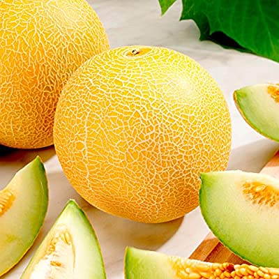 Earth Seeds Co 20 Pcs Melon Seeds F1 Lavi Gal, Tasty, Creamy Flesh, Early Fruiting Organic Fruit Seeds Ideal fro Growing in Our Less Than Perfect British Summers : Garden & Outdoor