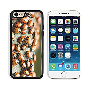 Ladybug Bugs Insects Colony Nature Apple iPhone 6 TPU Snap Cover Premium Aluminium Design Back Plate Case Customized Made to Order Support Ready Liil iPhone_6 Professional Case Touch Accessories Graphic Covers Designed Model Sleeve HD Template Wallpaper P