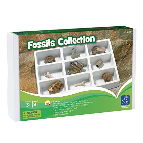 Educational Insights Fossil Collection