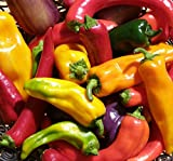 Hot Pepper Seed Assortment- 6 Varieties, Over 300 Seeds, All Non-GMO Heirloom Varieties