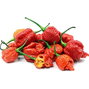 Trinidad Moruga Scorpion Pepper Vegetable Semillas Reliable Worlds Hottest Pepper 100 Semillas