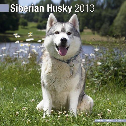 Siberian Husky W 2013 Siberian Husky W 2013