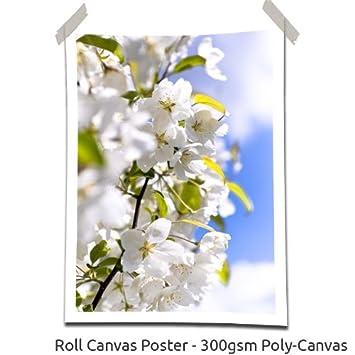 White Blossom, Size: 32\