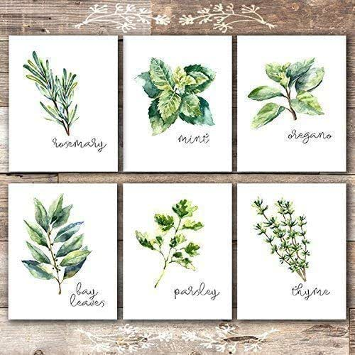 Kitchen Herbs: Amazon.com: Kitchen Herbs Art Prints