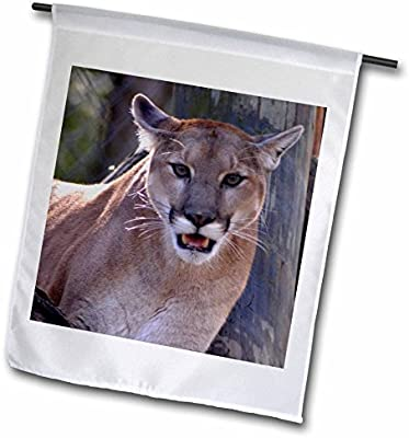 3drose The Eyes Say It All A Cougar That Looks Like He Is Staring You Garden Flag 12 By 18 Buy Online At Best Price In Uae Amazon Ae
