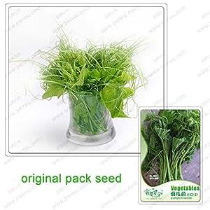 10 Semillas / paquete, de calabaza Semillas de plantas de semillero, jardín potted verdes semillas orgánicos no modificados genéticamente
