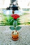 JustPaperRoses Desk Rose