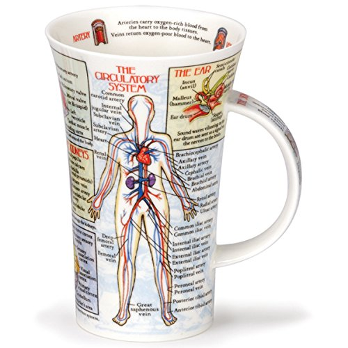 Dunoon Glencoe Fine China Educational BODYWORKS Mug Cup 500ml 16.9 fl oz