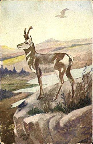 Antelope - Postcard Advertising Other Animals Original Vintage Postcard from CardCow Vintage Postcards