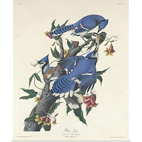 """GREATBIGCANVAS Poster Print Entitled Blue Jay, 1831 by John James Audubon 10""""x12"""""""
