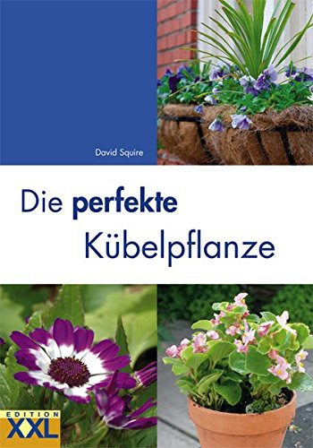 Die perfekte Kübelpflanze