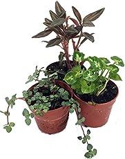 A List Of Low Light Terrarium Plants