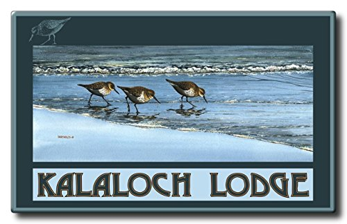 Kalaloch Lodge Birds At Beach Aluminum HD Metal Wall Art by Artist Dave Bartholet (9 x 14.4 inch) Art Print for Bedroom, Living Room, Kitchen, Family and Dorm Room Wall - At Deer Park Arches