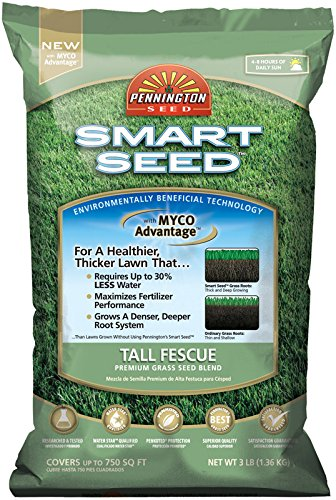 Pennington Smart Seed Tall Fescue Grass Seed 3 lb.