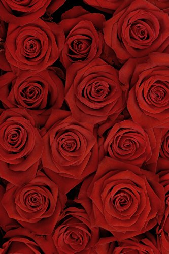 AOFOTO 6x8ft Romantic Red Roses Background Beautiful Blossom Bouquet Photography Backdrop Mother's Day Sweet Flowers Lovers Couple Lady Woman Girl Mom Portrait Photo Studio Props Video Drape Wallpaper