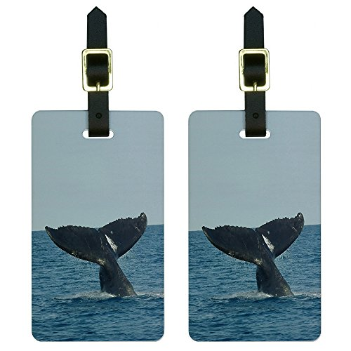 Humpback Whale Tail Watching Suitcase
