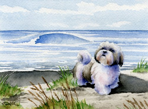(Shih Tzu At The Beach Art Print by Artist DJ Rogers)