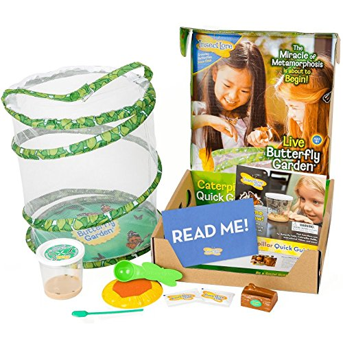 Insect Lore Deluxe Butterfly Garden With Live Cup Of Caterpillars And Feeding Habitat Kit