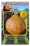 Everwilde Farms - Bushel Gourd Seeds - Jumbo Seed Packet (25)