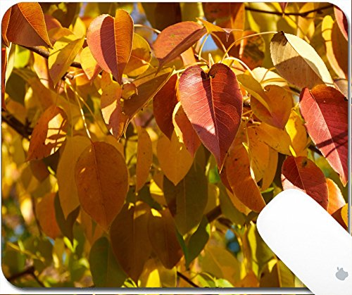 Luxlady Gaming Mousepad 9.25in X 7.25in IMAGE: 34315902 Bright red and yellow leaves of pear tree (Bradford Outdoor Light)