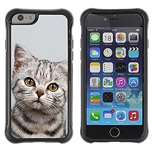 Suave TPU GEL Carcasa Funda Silicona Blando Estuche Caso de protección (para) Apple Iphone 6 PLUS 5.5 / CECELL Phone case / / Kitten Sad Manx Azules Shorthair /