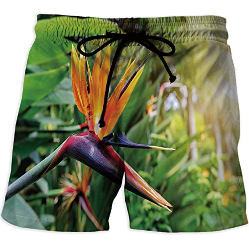 - Men's Fitted Casual Shorts and Quick-Drying Sports Pants,PlantMen's Board Short SwimwearClose up Image of Strelitzia Reginae Bird of Paradise Flower Madeira Island Portugal Decorative