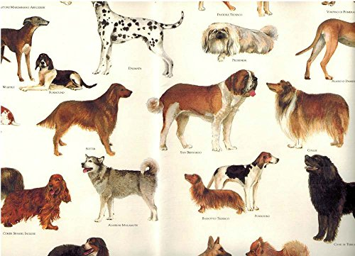 - Tassotti Dogs of the World Decorative Rolled Gift Wrap Decoupage Paper 2 Full Sheets
