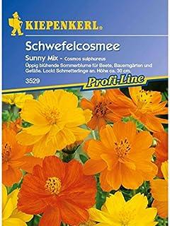 1 Stecketikett GRATIS Sommer Blumen Mix 120 Samen