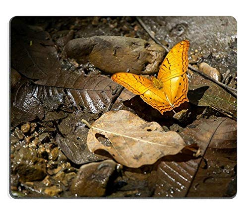 17P05536 Creativity Mousepad Gaming Mouse Pad Orange Butterfly on Leaf Common Cruiser
