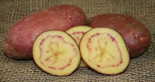 SEED POTATOES - 1 lb. French Fingerling * Organic Grown * Non GMO * Virus & Chemical Free * Ready for Spring Planting *