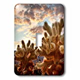 3dRose Danita Delimont - Cactus - Sunset over Cholla Cactus, Mojave Desert, Joshua Tree NP, California - Light Switch Covers - single toggle switch (lsp_259055_1)
