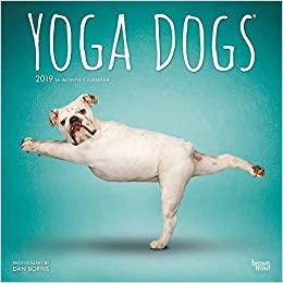 Yoga Dogs 2019 12 X 12 Inch Monthly Square Wall Calendar Animals