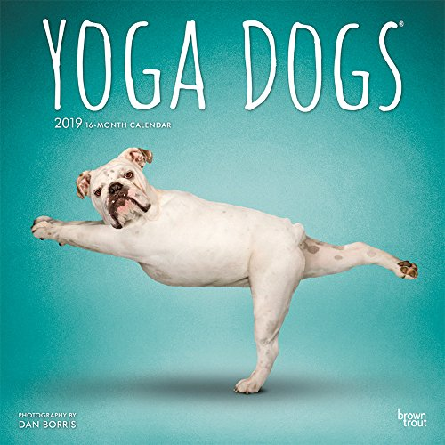 Yoga Dogs 2019 12 x 12 Inch Monthly Square Wall Calendar, Animals Humor -