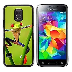LECELL--Funda protectora / Cubierta / Piel For Samsung Galaxy S5 Mini, SM-G800, NOT S5 REGULAR! -- Fitness Aerobics Frog Forest Green Amazon --