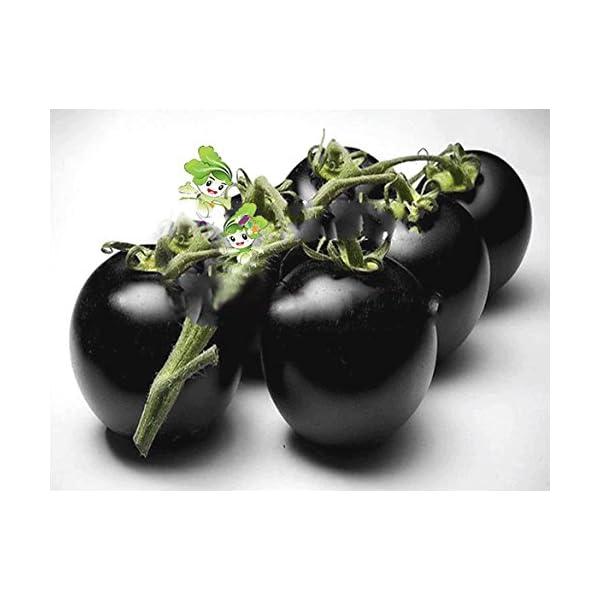 Ncient 20 Semi Sementi di Cherry Pomodori Neri per Orto Semi Vegetali Frutta Profumati Fiori Rari Piante Giardino… 2 spesavip