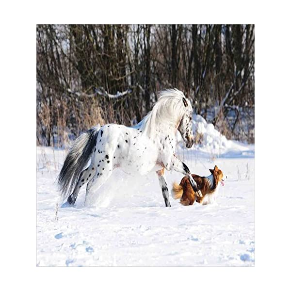 Ambesonne Horses Duvet Cover Set, Appaloosa Pony and Sable Border Collie Runs Gallop in Winter Photo Print, Decorative 2 Piece Bedding Set with 1 Pillow Sham, Twin Size, White Taupe 2