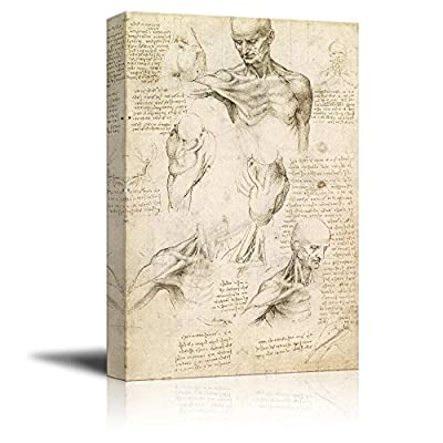 Superficial Anatomy of The Shoulder and Neck by Leonardo da Vinci - Canvas Print Wall Art Famous Oil Painting Reproduction - 12