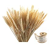 Golden Dried Natural Wheat Sheave Bundle Premium Fall Arrangements with Natural Laces Burlap Craft Lace Ribbon Roll for DIY Design, Corrugated Package (100 Pieces)