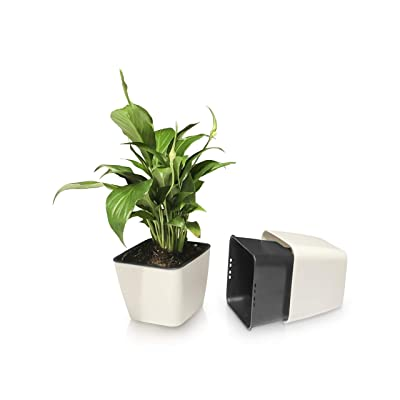 Zodiac Bee Self-Watering Planter, Set of 2 Simple Plastic Flower Pots, Suitable for Small Plants, Succulents, Cactus, or Bonsai Trees, Holds Water for 2 Weeks of Soil Irrigation : Garden & Outdoor
