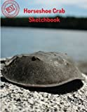 """Horseshoe Crab Sketchbook: Blank Paper for Drawing, Doodling or Sketching 100 Large Blank Pages (8.5""""x11"""") for Sketching, inspiring, Drawing Anything"""
