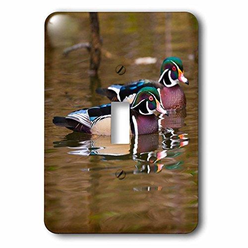 Wood Ducks, George C Reifel Bird Sanctuary, British Columbia, Canada Light Switch Cover ()