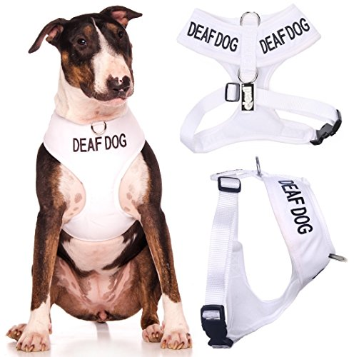 DEAF DOG (Dog Has Limited/No Hearing) White Color Coded Non-Pull Front and Back D Ring Padded and Waterproof Vest Dog Harness PREVENTS Accidents By Warning Others Of Your Dog In Advance (L)