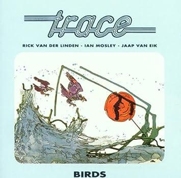 Resultado de imagen de Trace birds