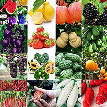20pcs / Blanco del Bolso de Pepino Semillas: Lotes Antioxidante ...