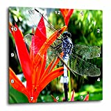 Insects – Dragon Fly – 10×10 Wall Clock (dpp_780_1) For Sale