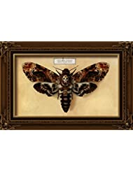 Death S Head Moth 16x24 Giclee Gallery Print Wall Decor Travel Poster