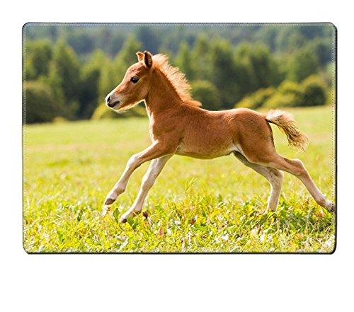 liili-placemat-natural-rubber-material-image-id-15217589-foal-mini-horse-falabella